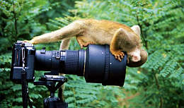 monkey-camera. Addo Elephant National Park