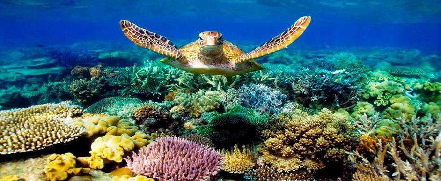This Zanzibar Holiday remember to Snorkel Mnemba Island?