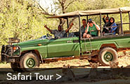 Guided 4x4 safaris