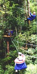 Tsitsikamma cableway Tree top Canopy tours