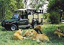 Game drive - South African coach tour