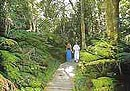 Various forest walks throughout the Garden Route - South Africa coach tours