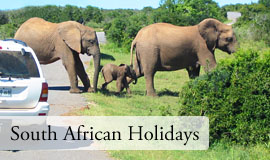 South African guided tours holiday specials