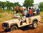 Vic Falls 4x4 game drives