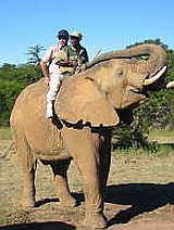 Ride an Elephant at Zuurberg